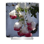 Snow Covered Roses Shower Curtain