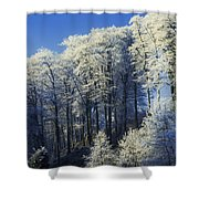 Snow Covered Trees In A Forest, County Shower Curtain