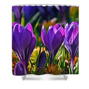 Snow Crocus Winters Cheer Shower Curtain