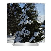 Snow Crusted Evergreen Shower Curtain