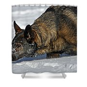 Snow Dog Shower Curtain by Karol Livote