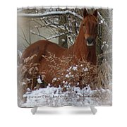 Snow Dreams Shower Curtain