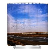 Snow Geese At Rest Shower Curtain