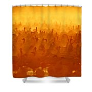 Snow Geese At Sunrise Shower Curtain