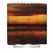 Snow Geese Come To Rest In Squaw Creek Shower Curtain
