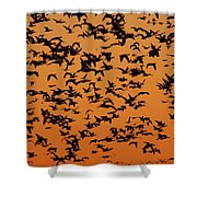 Snow Goose Migration Shower Curtain by Mircea Costina Photography