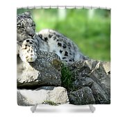 Snow Leopard At Rest. Kitty Time Shower Curtain