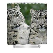 Snow Leopard Pair Sitting Shower Curtain