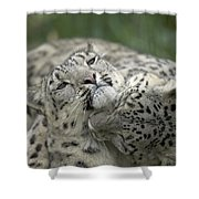 Snow Leopards Playing Shower Curtain