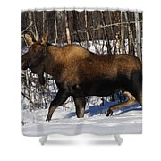 Snow Moose Shower Curtain