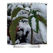 Snow Plant Shower Curtain