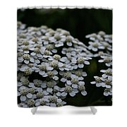 Snow Sport Yarrow Shower Curtain