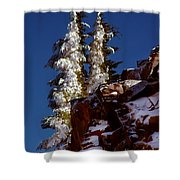 Snow Tipped Trees  Shower Curtain