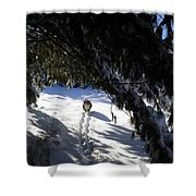 Snow Trail-under The Boughs Shower Curtain
