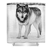 Snow Wolf Shower Curtain