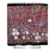 Snowberries And Rosehips Shower Curtain