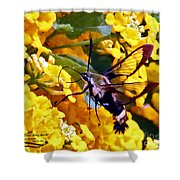 Snowberry Clearwing Hummingbird Moth Shower Curtain