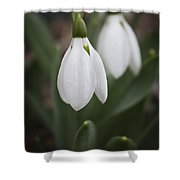 Snowdrop Purity Shower Curtain
