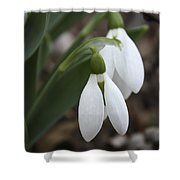Snowdrops 2012 Shower Curtain