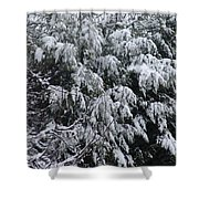 Snowy Branches Winter Shower Curtain