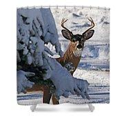 Snowy Buck Shower Curtain