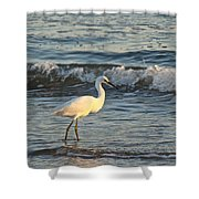 Snowy Egret - Egretta Thula Shower Curtain