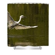 Snowy Egret Fishing In Florida Shower Curtain