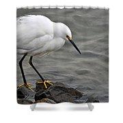 Snowy Egret Shower Curtain