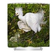 Snowy Egret In Breeding Plumage Shower Curtain