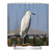 Snowy Egret Stare Down Shower Curtain