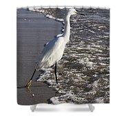 Snowy Egret Walking Shower Curtain
