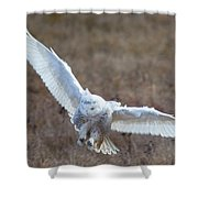 Snowy Flight Shower Curtain