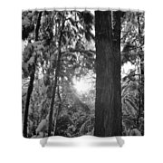 Snowy Forest Bw Shower Curtain