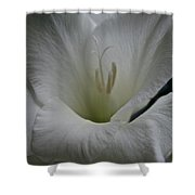 Snowy Gladiolus Shower Curtain
