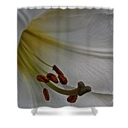 Snowy Lily Shower Curtain