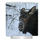 Snowy Nose Shower Curtain