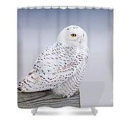 Snowy Owl I Shower Curtain