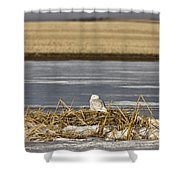 Snowy Owl Perched Frozenpond Shower Curtain