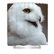 Snowy Owl Portrait Shower Curtain