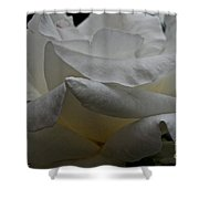 Snowy Rose Shower Curtain