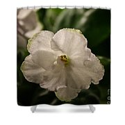 Snowy White Violet Shower Curtain