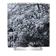 Snowy Winter Branches Shower Curtain