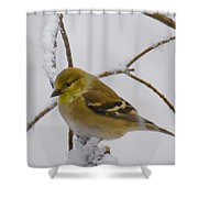 Snowy Yellow Finch Shower Curtain