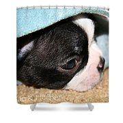 Snuggler Shower Curtain