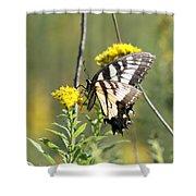 So Fragile - Butterfly Shower Curtain