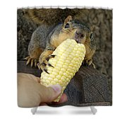 So Much Sweet Corn So Little Time Shower Curtain