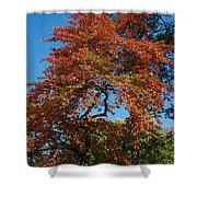Soaring Fall Shower Curtain