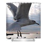 Soaring Gull Shower Curtain