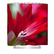 Soaring Red Shower Curtain