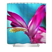 Soft And Delicate Cactus Bloom 3 Shower Curtain by Kaye Menner